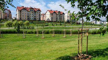 W tym roku miasto na nowe rośliny wydało blisko 2 mln zł. Za te pieniądze w Rzeszowie posadzono 900 drzew, 20 tys. krzewów, 5 tys. bylin i 2 tys. ozdobnych traw.