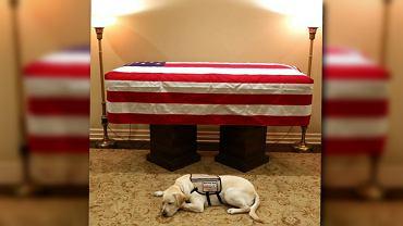 Labrador Sully przy trumnie George'a Busha seniora
