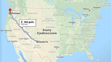 USA. Kot odnalazł się po pięciu latach. Oddalił się od domu o 2 tys. km (zdjęcie ilustracyjne)