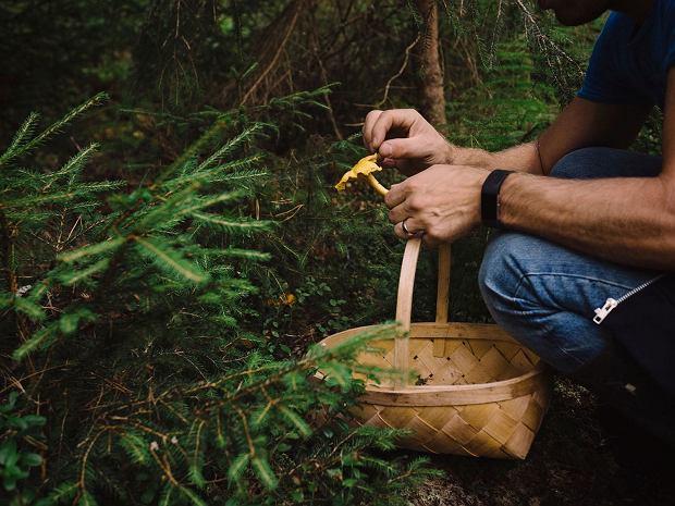 Jeśli nie jesteśmy pewni co do tego, czy dany grzyb jest jadalny, nie zrywamy go.