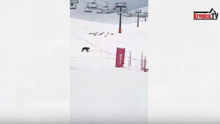 Na stoku narciarskich w Dolinie Gąsienicowej pojawił się niedźwiedź. Nagrali go narciarze
