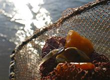 Ministerstwo środowiska chce ułatwić wydobycie bursztynu
