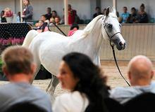 Cenne konie wyjechały z polskiej stadniny na podstawie wątpliwych umów