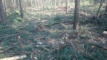 Wycinka na terenie ogrodów działkowych przy Sylikatach