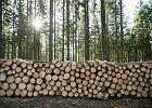 """Troska o lasy w Polsce to wyścig z czasem. """"Przyrodnicza sieć nie wytrzymuje zarządzania Lasów Państwowych"""""""