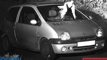 Niemcy. 'Pierzasty anioł stróż' uchronił kierowcę przed mandatem