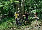 Będą szukać w Bielsku-Białej drzew o pomnikowych rozmiarach