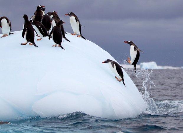 Pingwiny / fot. Shutterstock