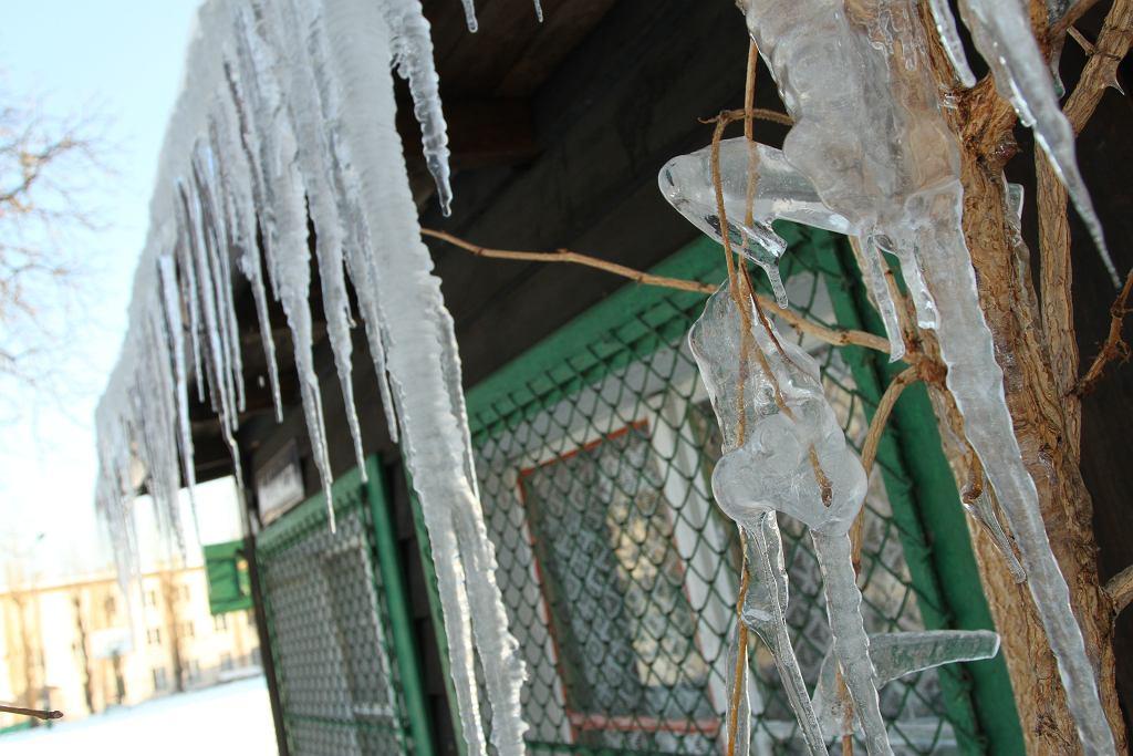 Pogoda w Radomiu. IMGW ostrzega przed silnym mrozem w Radomiu i regionie. Przed nami najzimniejsza noc (Mróz, zdjęcie ilustracyjne)
