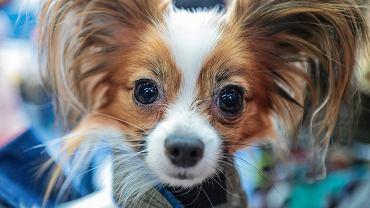 Korea Południowa. Seul będzie tesował psy i kota na obecność wirusa Covid-19