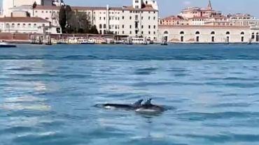 Delfiny w Canal Grande