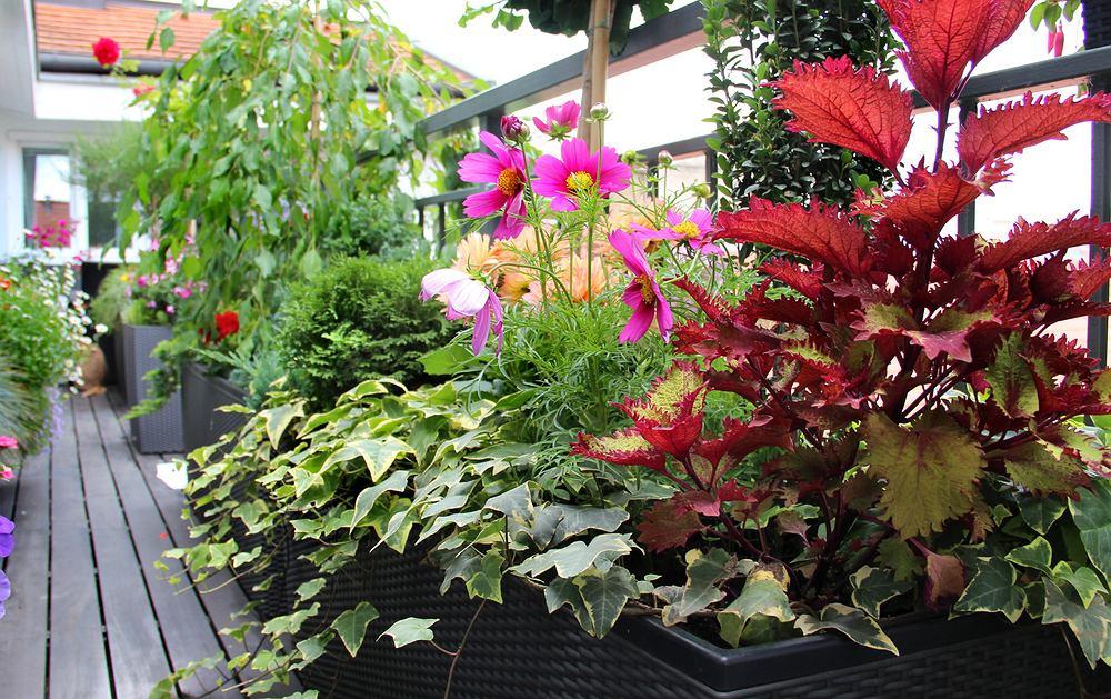 Kwiaty na balkon. Które gatunki sprawdzą się najlepiej? Zdjęcie ilustracyjne