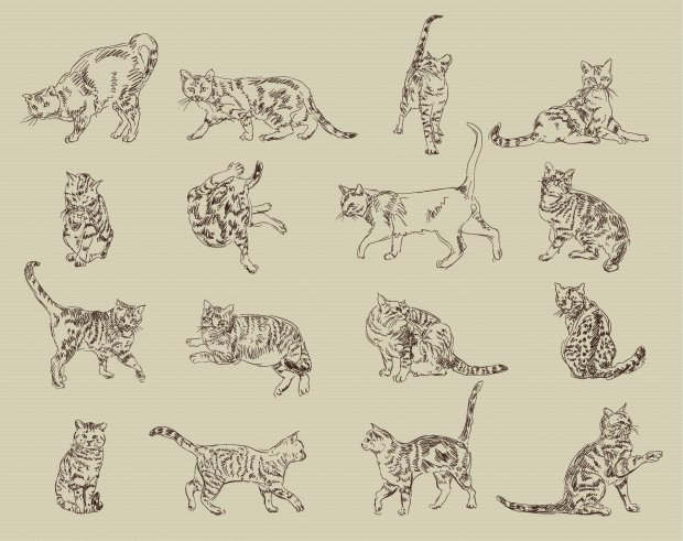 Jak narysować kota? Można też tak: w ruchu