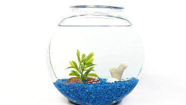 Akwarium kula jest niezwykle popularnym zbiornikiem. Jednak czy to, co podoba się nam jest dobre dla rybek? Czy złote rybki i inne małe rybki akwariowe mogą pływać w kuli czy lepiej zdecydować się na standardowe, prostopadłościenne, akwarium?