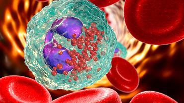 Eozynocyty powstają w szpiku kostnym z komórek macierzystych