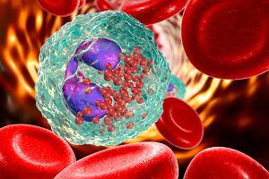 Eozynocyty - rola, normy, patologie