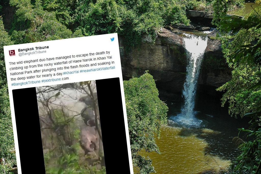 Sześć słoni utopiło się w wodospadzie na terenie parku narodowego