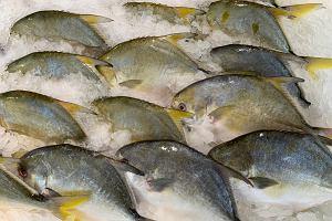 Ryba maślana - jakie właściwości ma jej mięso, jak ją spożywać?