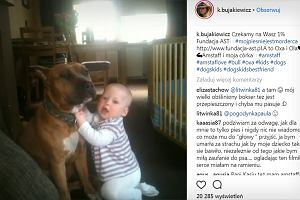 """Kasia Bujakiewicz udostępniła filmik, na którym jej córka bawi się z amstafem. """"Że ty się nie boisz"""""""