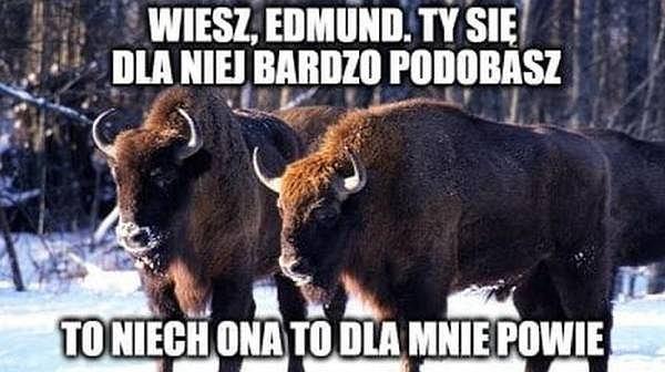 https://bi.im-g.pl/im/b0/c3/16/z23870640Q,Memy.jpg