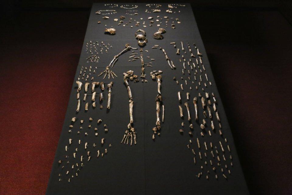 Zdjęcie numer 4 w galerii - Homo naledi. Jak odkryto nowy gatunek człowieka.