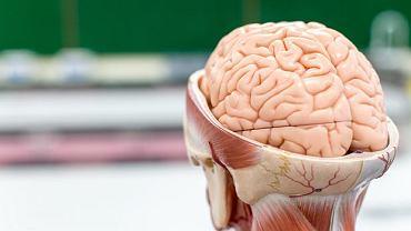 Mózg- otępienie czołowe