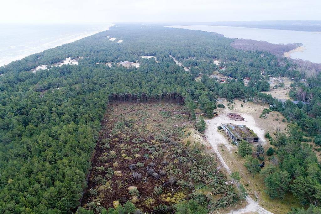 4 ha lasu wcięte w Łebie