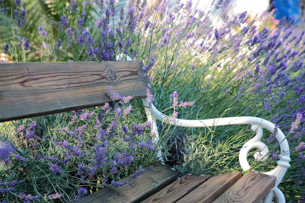 Ławka ogrodowa z oparciem w stylu prowansalskim.