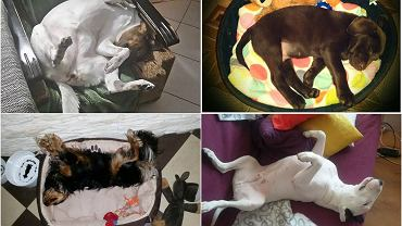 Psy i ich pozycje podczas snu