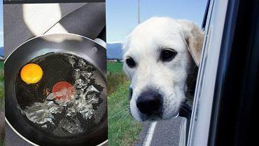 Zostawianie psa w aucie w gorący dzień to fatalny pomysł, który może się skończyć tragicznie