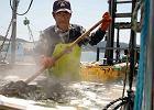 Najlepsze na świecie są japońskie wakame
