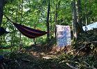 20 osób zawiesiło hamaki w lesie koło Lutowisk. Protestują przeciwko wycince 100-letnich drzew