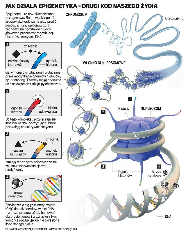 Jak działa epigenetyka