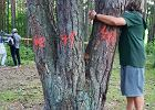 """""""Miejsce zbrodni"""". Happening mieszkańców przeciwko kolejnej wycince drzew w parku w Sulejówku"""