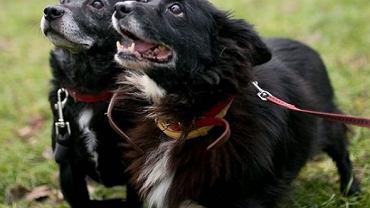 Romeo i Julia - dwa psy przeznaczone do adopcji na Paluchu
