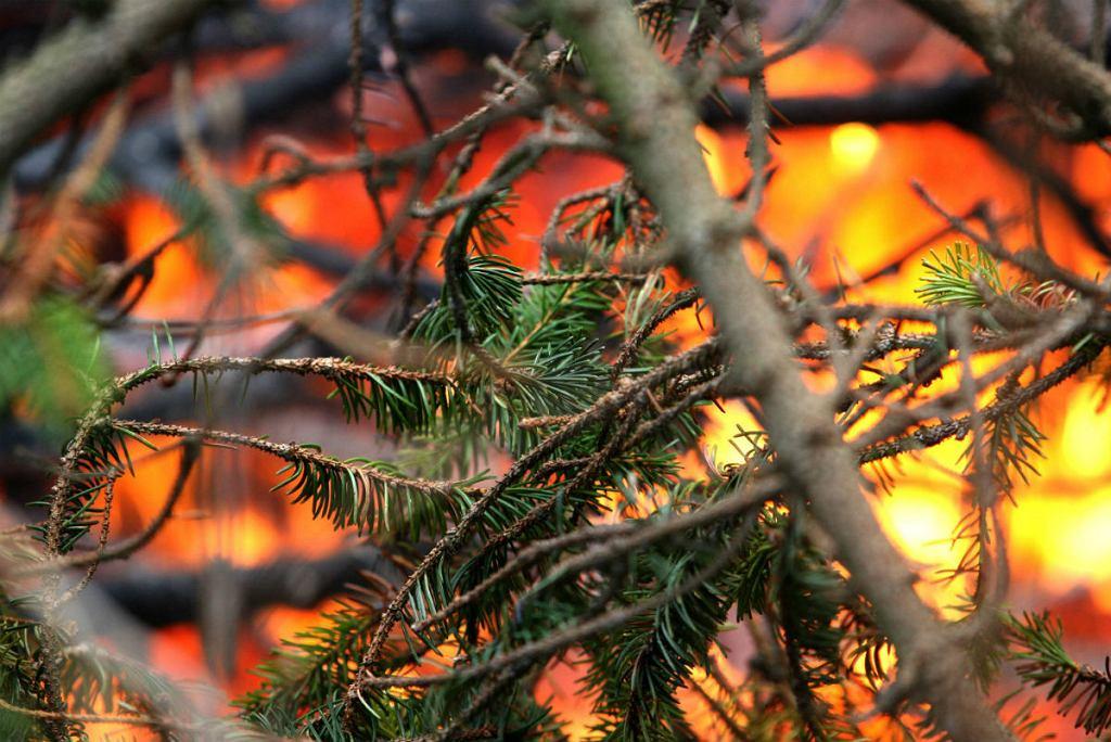 Pożar lasu na Bielanach