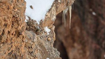 Saurabh Desai, fotograf z Indii, uchwycił na zdjęciu śnieżnego lamparta, który idealnie wkomponował się w tło. W ogóle go nie widać