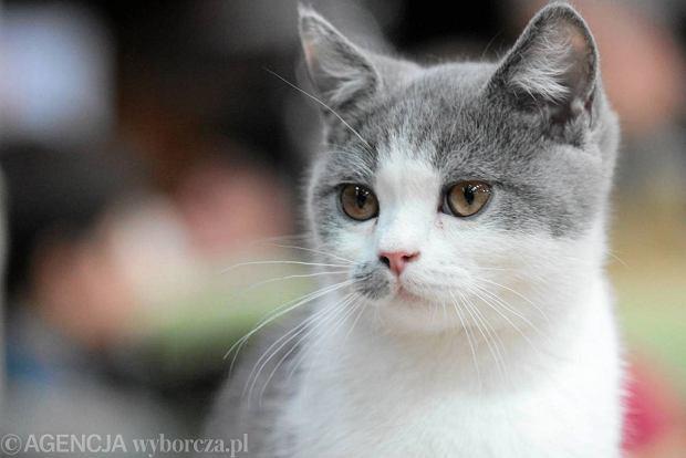 Koty, szczury, myszy i świnki morskie opanowały Ursynów