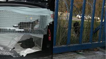Akcja łapania kotki