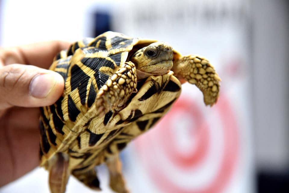 Filipiny. W porzuconym bagażu znaleziono ponad 1500 żółwi