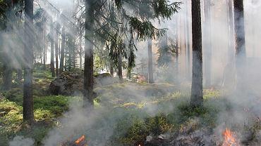 Pożary w Puszczy Kampinoskiej były częstsze niż zazwyczaj. Podpalaczem okazał się 21-letni strażak