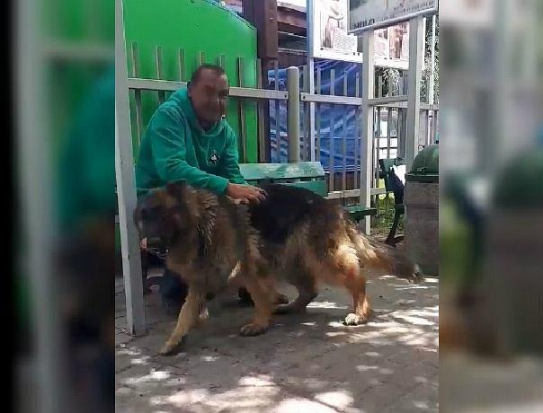 Diana, pies bezdomnego mężczyzny, odnalazł się