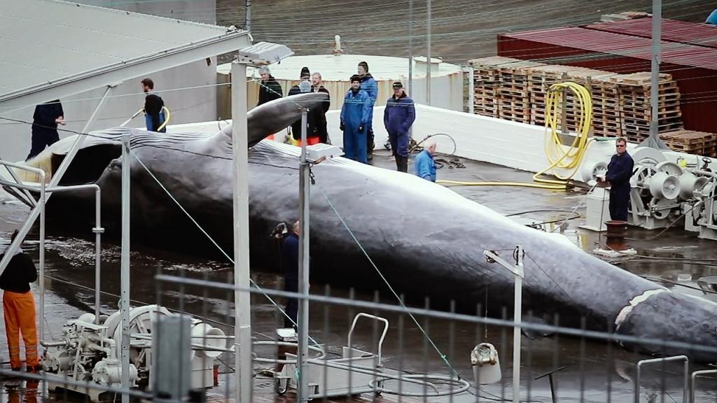 Rzeź wielorybów