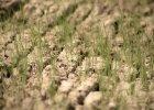Ocieplenie klimatu zwiększy ryzyko głodu na świecie - ostrzega raport ekspertów