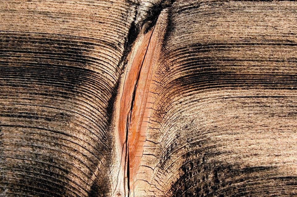 Zdjęcie numer 10 w galerii - Aplikacja do zarządzania waginą: pierwsze na świecie interaktywne genitalia