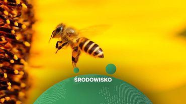 Światowy Dzień Pszczół. Praca tych owadów w Polsce jest warta nawet 4 mld złotych rocznie