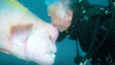 Nurek z Japonii zaprzyjaźnił się z rybą. Pomógł jej, gdy ta nie była w stanie zdobyć sama pokarmu