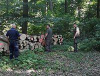 Wspólne patrole policji i leśników: nasila się kradzież drewna