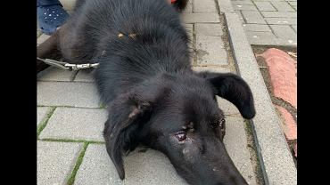 W ciele psa było 50 śrutów