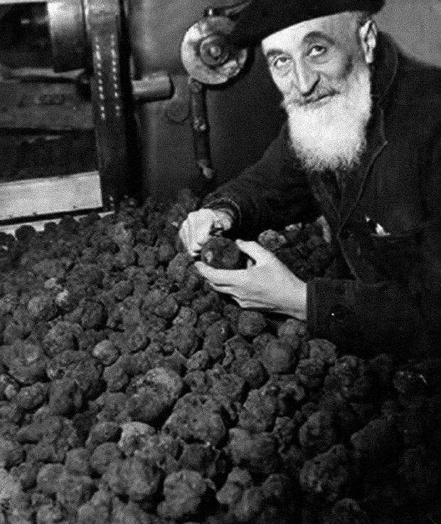 Truflowe żniwa (fotografia Roberta Doisneau, dokumentalisty życia codziennegoFrancji XX wieku)